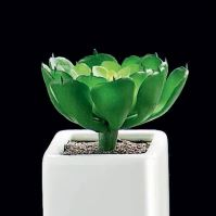 Sukulent malý XI., porcelán, dekorace, 5x5cm - zelená/bílá (lesklá)
